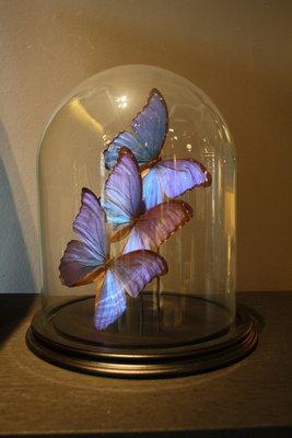 Blauwe Morpho Vlinders Stolp