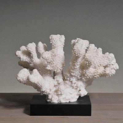 Koraalstuk Op Zwarte Voet (Afgietsel) - Acropora FLorida