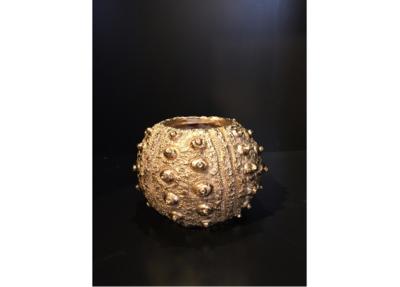 Golden Sea Urchin